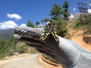 Gloves also make a good landing point for insects you find while riding. This is the Giro Xena Glove